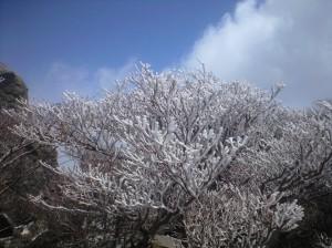 山頂で見せる雪化粧した木々